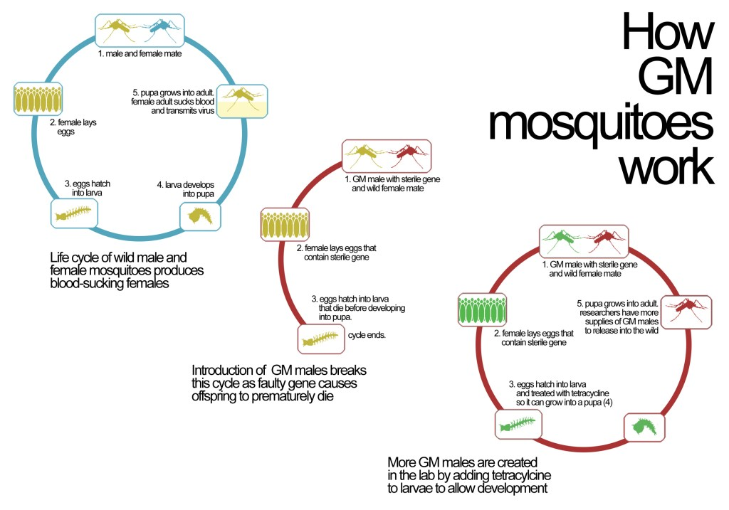 TRANSGENIC MOSQUITOES PDF